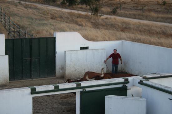 Manoeuvrer les Toros