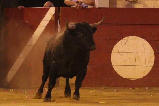 1er Toro !