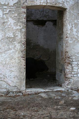 Le castaño n° 62 à l'ombre dans un ancien moulin